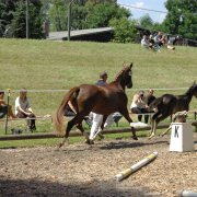 Pferde - Horses - Turniere :: Events